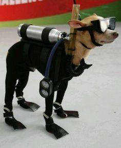 Legend Diving Lembongan Team - Scuba dog